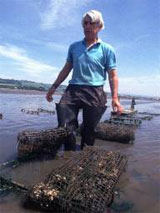 Oyster mariculture in the inter-tidal zone
